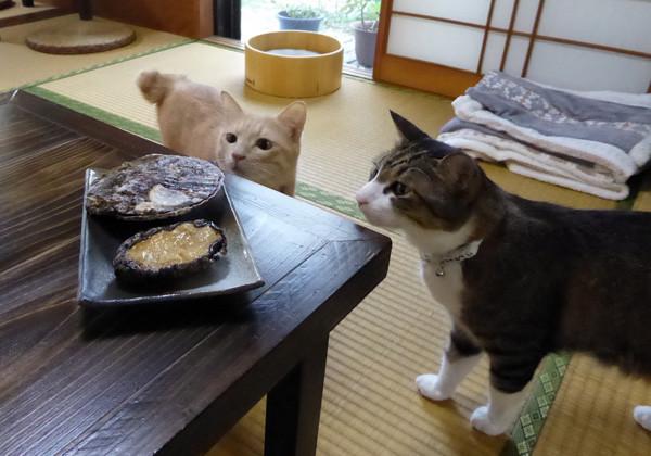 猫とアワビとホタテ